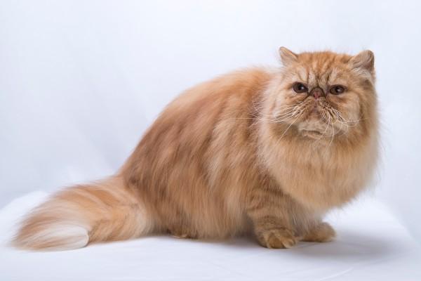 広島ペット撮影 犬・猫